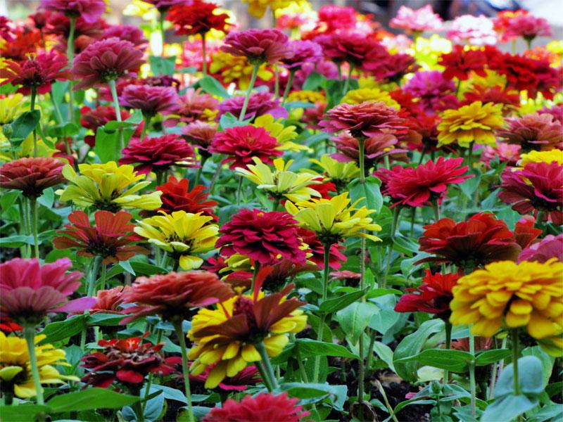 цветы в Тбилиси
