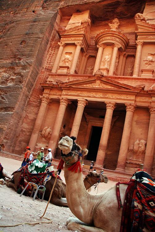 Верблюд на фоне Сокровищницы, Петра
