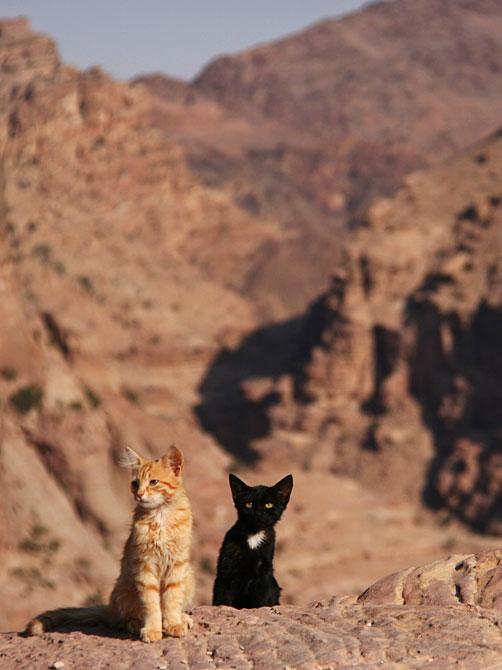 Котята в Петре