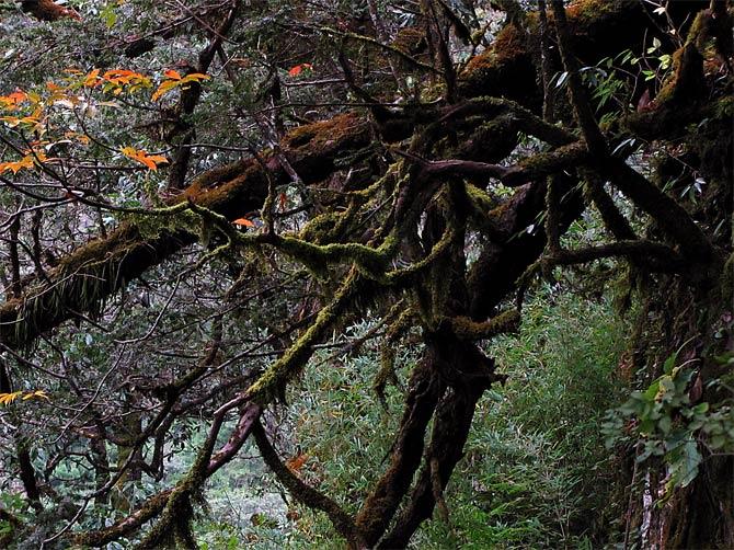 Зловещее дерево
