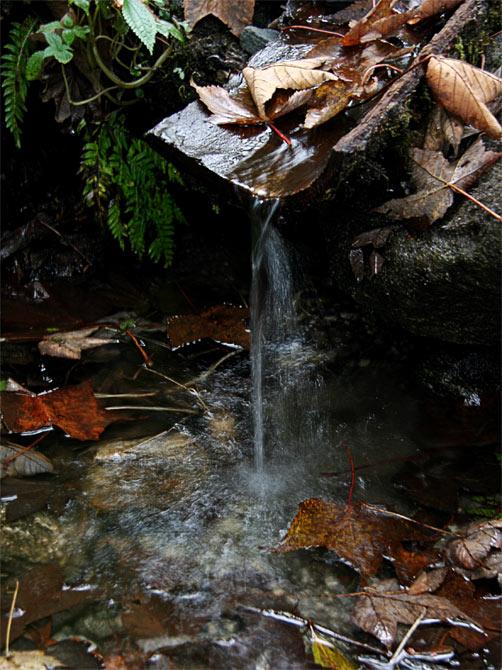 Осенний источник