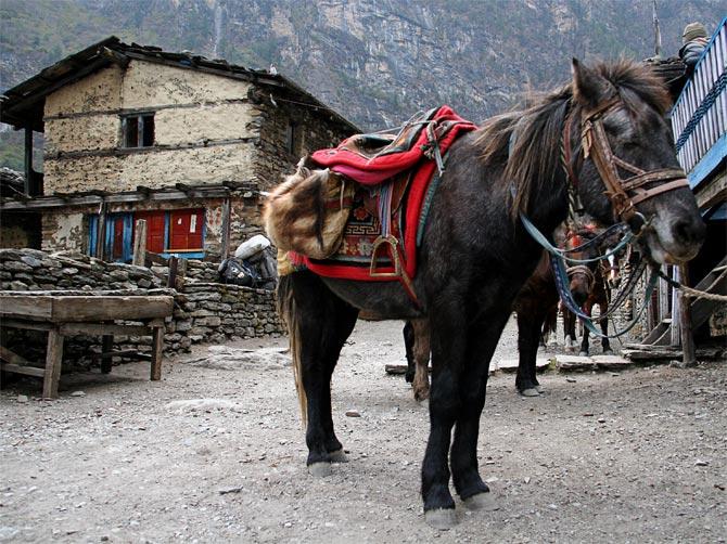 Лошадки в Братанге