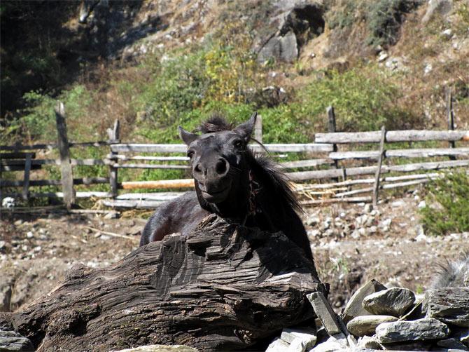 Улыбающаяся лошадь