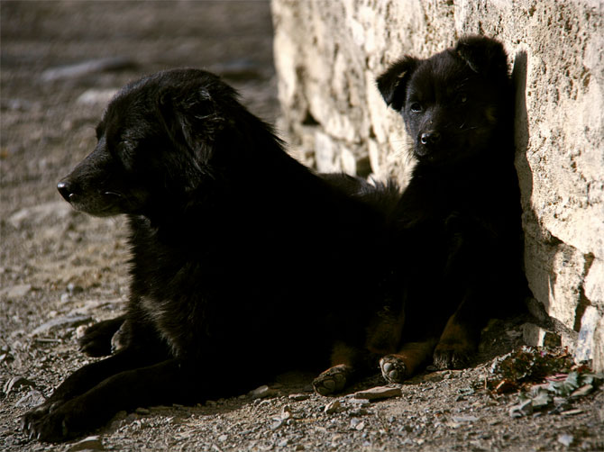 Собаки на солнце