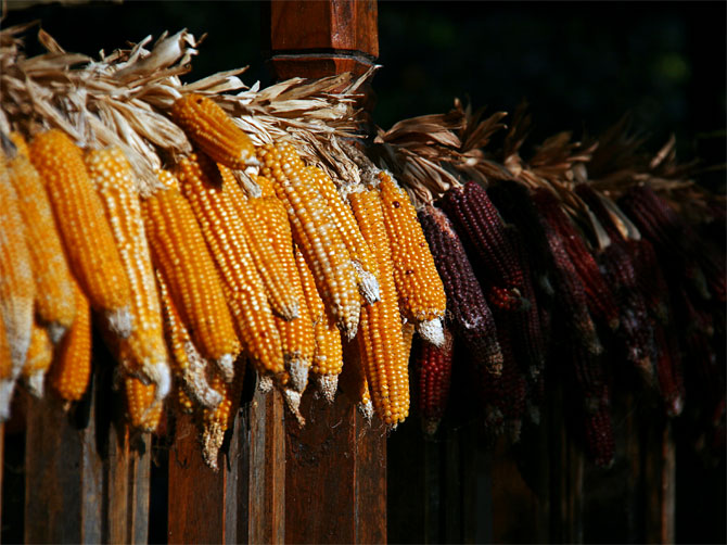 Сушеная кукуруза