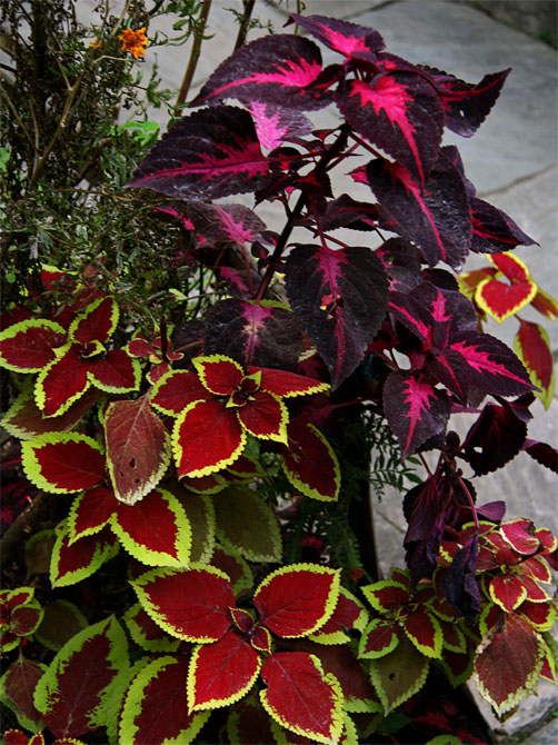 Цветы в Татопани