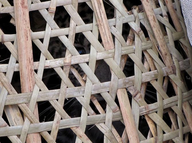 Леопард в корзинке