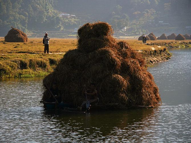 Сплав сена на плоту в окрестностях города Покхара, Непал