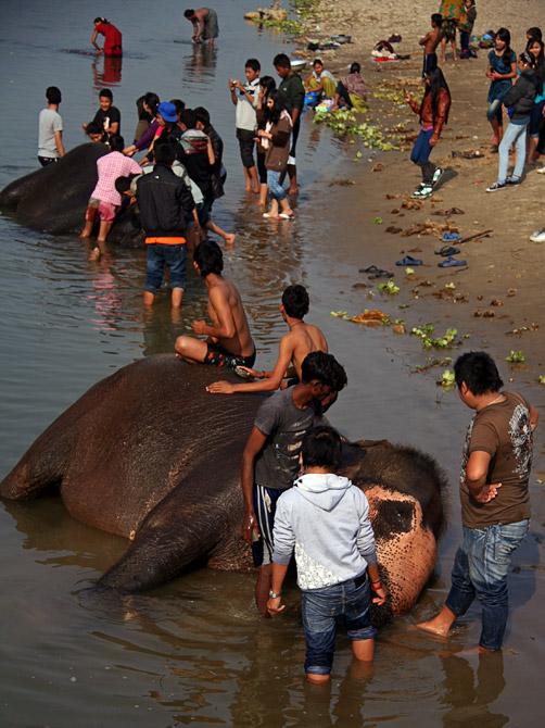 Купание слонов, заповедник Читван, Непал