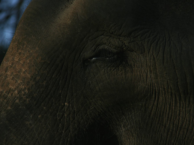 Глаз слона, заповедник Читван, Непал