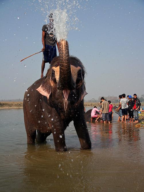 Слон-фонтан, заповедник Читван, Непал