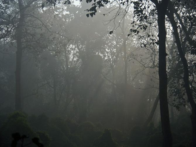 Туманное утро, заповедник Читван, Непал