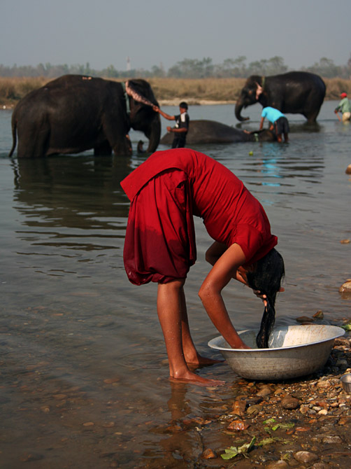 Девушка купается вместе со слонами, заповедник Читван, Непал