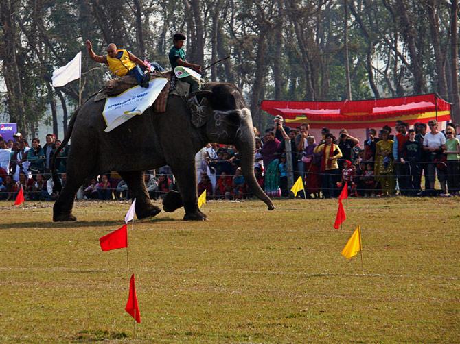 """Бегущий слон, фестиваль """"Слоновьи бега"""", Читван, Непал"""
