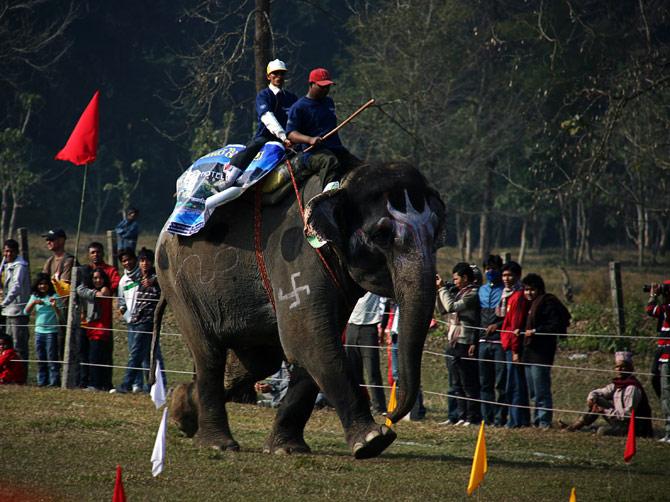 """Бегущий слон со свастикой, фестиваль """"Слоновьи бега"""", Читван, Непал"""