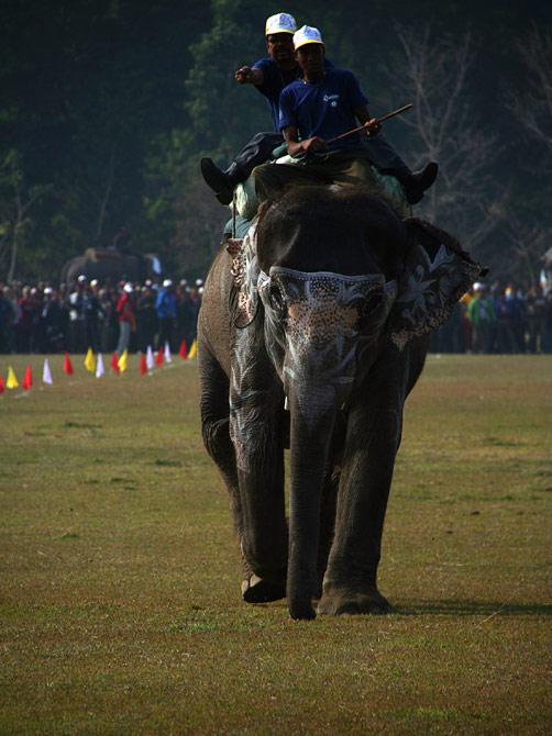 """Слон и два седока, фестиваль """"Слоновьи бега"""", Читван, Непал"""