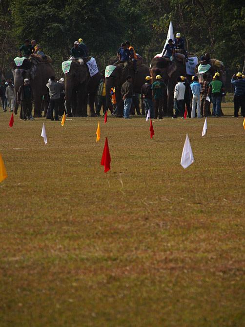 """Начало соревнований, фестиваль """"Слоновьи бега"""", Читван, Непал"""