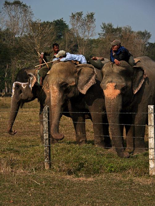 """Погонщики слонов отдыхают на своих питомцах, фестиваль """"Слоновьи бега"""", Читван, Непал"""