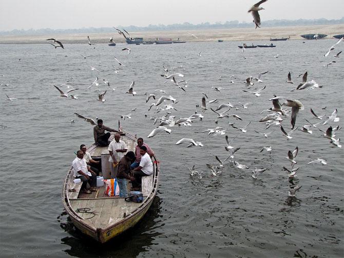 Чайки над Гангой, Варанаси, Индия