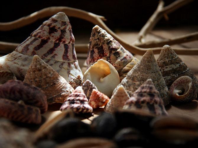 Большие ракушки-конусы, Индонезия