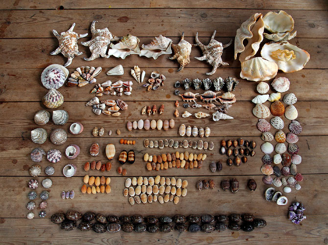 Разные виды ракушек с острова Ве, Индонезия