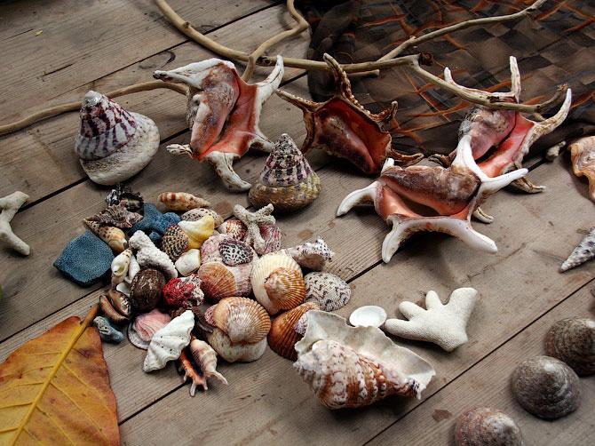 Ракушки с острова Ве, Суматра