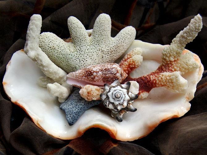 Композиция из раковин и кораллов