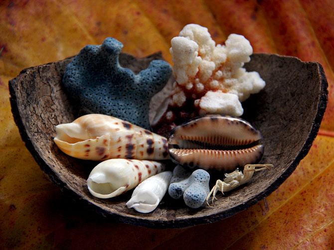 Композиция из ракушек и кораллов в кокосовой скорлупе