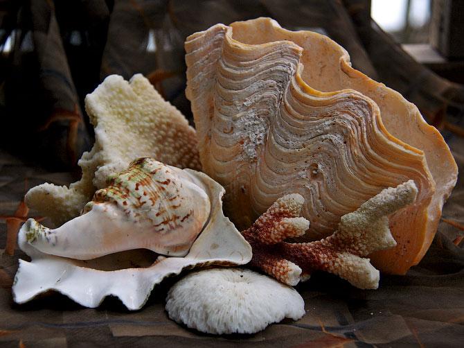 Композиция с большими раковинами и кораллами