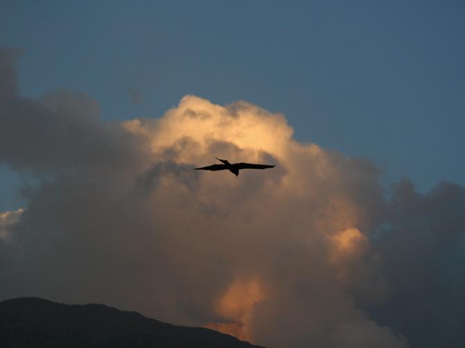 Ястреб парит в вечернем небе, Маклеод Ганж, Дарамсала, Индия