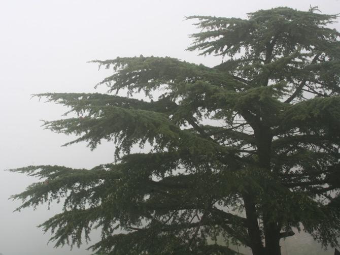Туман в Маклеод Ганже, Дарамсала, Индия