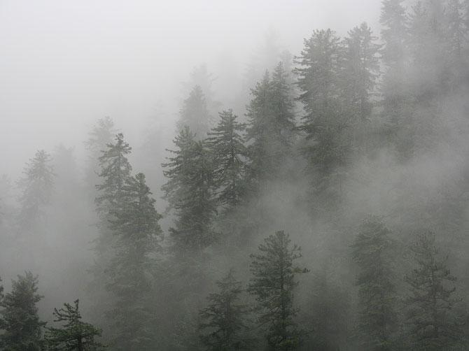 Утренний туман в Маникаране, Индия