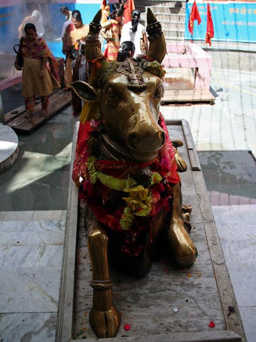 Золотой бык в храме Шивы, Маникаран, Индия