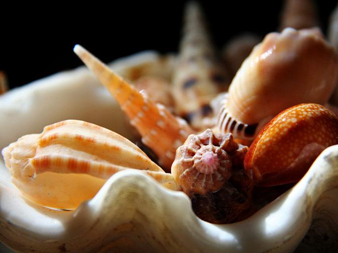 Ракушки из Андаманского моря, Индонезия