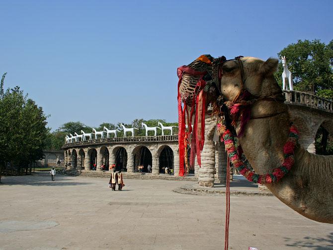 Верблюд в Парке камней, Чандигар, Индия