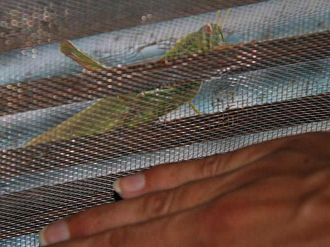 Огромная саранча на двери нашего дома в Ао Нанге