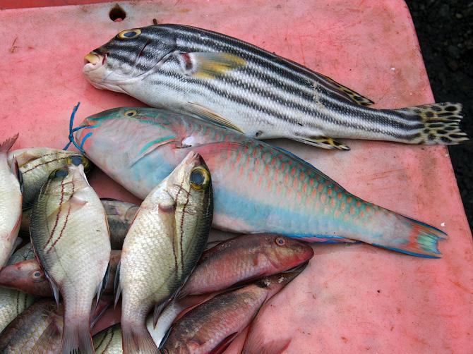Рыбный рынок, Аче, Суматра, Индонезия