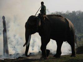Слон в заповеднике Читван, Непал