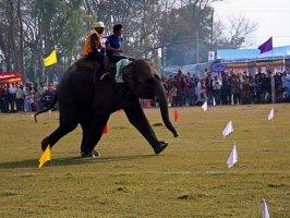 Бегущий слоненок, фестиваль