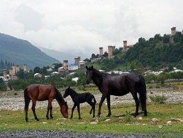 Лошади на фоне башен