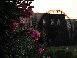 Нория в Хаме