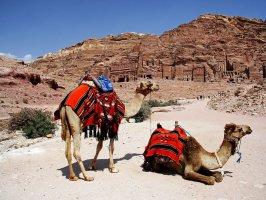 Два верблюда на фоне Петры