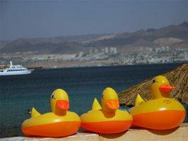 Резиновые уточки на берегу Красного моря