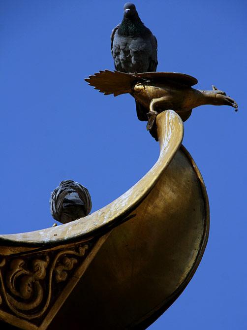 Голубь верхом на голубе, Катманду, Непал