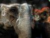 Участницы конкурса слоноты