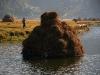 Плавучий стог сена
