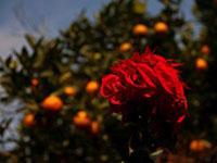 Трек вокруг Аннапурны: дневник, отчет – глава 10